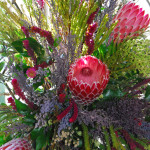 Close up of Protea flowers in Nelson Mandela display
